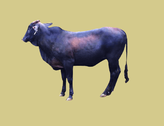 Investment Cow