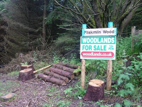 Woodlands for sale