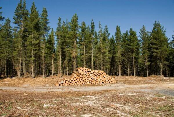 Lithuanian Timber